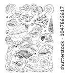 hand drow seashells color...   Shutterstock .eps vector #1047863617