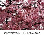 close up of fruit flowers in... | Shutterstock . vector #1047876535