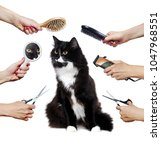 Stock photo long haired adult black and white cat while grooming procedure 1047968551