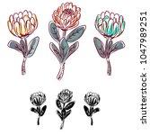 protea flower isolated vector... | Shutterstock .eps vector #1047989251