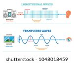 longitudinal and transverse... | Shutterstock .eps vector #1048018459