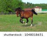 thoroughbred horse racer runs...   Shutterstock . vector #1048018651