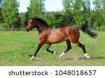 thoroughbred horse racer runs...   Shutterstock . vector #1048018657