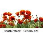 Stock photo summer poppies beautiful poppies border 104802521