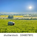 Sheep Enjoys Eating Grass Unde...