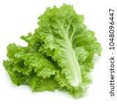 fresh green lettuce salad... | Shutterstock . vector #1048096447