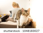 mother  daughter and cat  in a... | Shutterstock . vector #1048183027