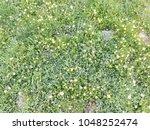 yellow daisy flowers field...   Shutterstock . vector #1048252474