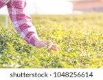 business man communicate order... | Shutterstock . vector #1048256614