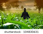 Farmer Woman Walking In Corn...