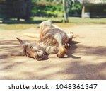 Sleeping Kangaroo At Park