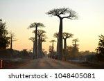 baobab trees in madagascar | Shutterstock . vector #1048405081