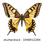common swallowtail butterfly ... | Shutterstock . vector #1048412284