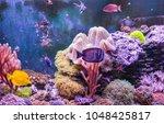 reef tank  marine aquarium full ...   Shutterstock . vector #1048425817