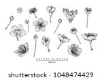 flower drawings. collection of... | Shutterstock .eps vector #1048474429