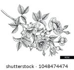 flower drawings.  collection of ... | Shutterstock .eps vector #1048474474