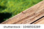 Red Dragonfly On A Dry Wood...