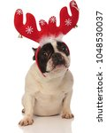 cute little french bulldog...   Shutterstock . vector #1048530037
