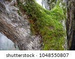 tree with moss on roots in a... | Shutterstock . vector #1048550807