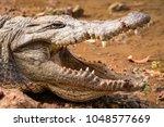crocodile in the bandia reserve ... | Shutterstock . vector #1048577669