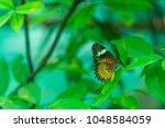 butterfly in the garden | Shutterstock . vector #1048584059