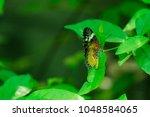 butterfly in the garden | Shutterstock . vector #1048584065