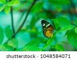 butterfly in the garden | Shutterstock . vector #1048584071