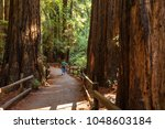 muir woods national monument... | Shutterstock . vector #1048603184