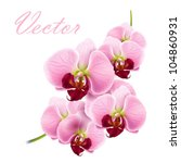 beautiful orchids flowers... | Shutterstock .eps vector #104860931