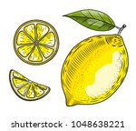 hand drawn lemon. isolated on... | Shutterstock . vector #1048638221