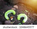 two green caterpillars on black ...   Shutterstock . vector #1048645577
