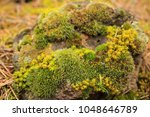 Small photo of Moss rock with green, yellow andt brown colors in springtime in Spanish forest.