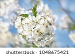springtime background. soft... | Shutterstock . vector #1048675421