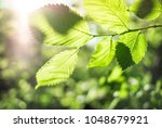 nature background with green...   Shutterstock . vector #1048679921