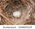 single egg in a spotted towhee...   Shutterstock . vector #1048690109