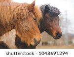 the two cute horses with their... | Shutterstock . vector #1048691294