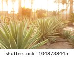 group of cactus bushes on the...   Shutterstock . vector #1048738445