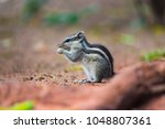 chipmunks are members of the... | Shutterstock . vector #1048807361