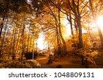 autumn scenery. beautiful gold... | Shutterstock . vector #1048809131
