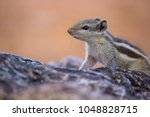 squirrels are members of the... | Shutterstock . vector #1048828715
