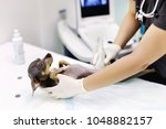 dog having ultrasound scan in... | Shutterstock . vector #1048882157