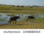 Small photo of Safari ensure tourists to see the African wildlife with elephant herds, birds and antelopes