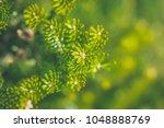 pine needles in close up....   Shutterstock . vector #1048888769