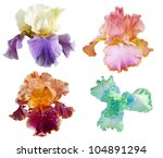 Collection Of Four Iris Flowers ...