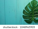 nature green leaf with shabby...   Shutterstock . vector #1048965905