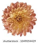 chrysanthemum  red yellow....   Shutterstock . vector #1049054429