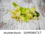 Linden Flowers On The Old...