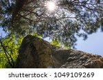 photo image of pine branch and... | Shutterstock . vector #1049109269