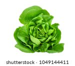 green butter lettuce vegetable... | Shutterstock . vector #1049144411