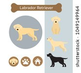 labrador retriever dog breed... | Shutterstock .eps vector #1049149964